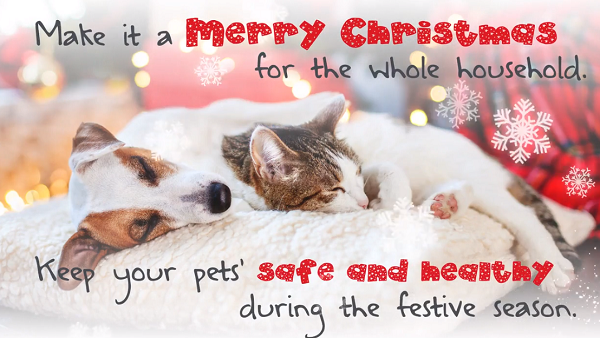 Christmas 'Safety' tips for pet owners