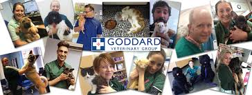 Goddard Vet Group love The Vet Channel!