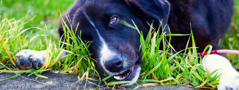 Top 5 Pet Questions – Answered